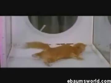 Kot pod wpływem -LSD-