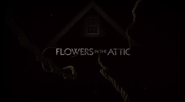 Kwiaty na poddaszu 2014